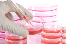 adult-stem-cells-research