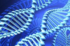 longevity-gene