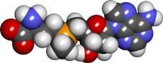 s-adenosyl-methionine