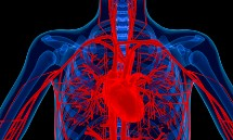 stem-cells-and-heart-disease
