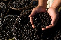 health-benefits-of-acai-berry