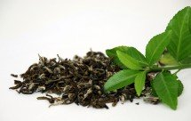 now-green-tea